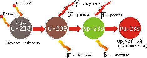 как стабильный изотоп уран-238 становится «топливом» для ядерного реактора